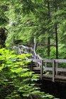 Канади, Британської Колумбії, Revelstoke національного парку Гори Крконоше Cedars Boardwalk стежка — стокове фото