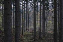 Чоловічий байкер безкоштовно їзда в лісі в денний час — стокове фото
