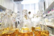 Пляшки поживне середовище в лабораторії, вчений у фоновому режимі — стокове фото