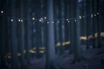 Germany, Bavaria, Sankt Englmar, Fairy lights in forest — Stock Photo