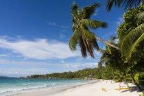 Праслин, Сейшельские острова Пальм (Cocos nucifera) на пляже Anse Lazio — стоковое фото