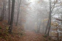 Alemania, Baviera, Alta Baviera, Berchtesgadener Land, Berchtesgaden National Park, Schoenau at Koenigssee, niebla en madera otoñal - foto de stock