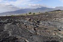 Spain, Canary Islands, La Palma, natural landmark Tubo Volcanico de Todoque near Las Manchas — стоковое фото