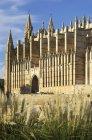 Испания, Пальма-де-Майорка, вид на Католическую Ла-Со при солнечном свете — стоковое фото