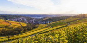 Germany, Baden-Wuerttemberg, Stuttgart, view over grapevines to Uhlbach — Stock Photo