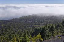 Spanien, Kanarische Inseln, La Palma, Cumbre Vieja Vulkan San Martin in der Nähe von Fuencaliente, malerische Berge Landschaft — Stockfoto