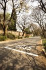 South Africa, Johannesburg,  Street in Parkview district with bare trees and road in sunshine weather day — Stock Photo