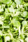 Close-up of Lambs lettuce leaves in heap — Stock Photo