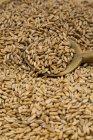 Primer plano de granos de espelta y cuchara de madera - foto de stock