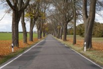 Германия, Мекленбург-Западная Померания, Деревянная улица осенью — стоковое фото