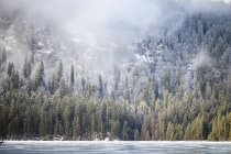 Germany, Bavaria, Frozen Grosser Arbersee Forest — Stock Photo