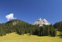 Itália, Veneto, Tre Cime di Lavaredo, árvores sobre campo de grama verde durante o dia — Fotografia de Stock
