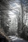 Germany, Bavaria, Bodenmais, Path through winterly forest — Stock Photo
