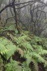 Spain, Canary Islands, La Palma, Cumbre Nueva, Cloud forest — стокове фото