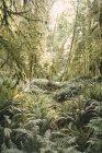 Вид на ліс Вентура, США — стокове фото