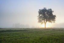 Германия, Ненниг, Вид на скошенное поле на восходе солнца — стоковое фото