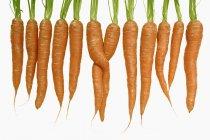 Fila de zanahorias frescas con tallos sobre fondo blanco - foto de stock
