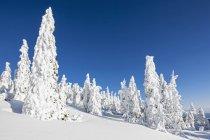 Vue de neige couverte d'arbres à la forêt de Bavière à la journée, Bavière, Allemagne — Photo de stock
