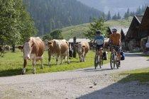 Австрія, Тіроль, чоловік і жінка, їзда на велосипеді по дорозі — стокове фото