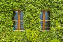 Austria, alta Austria, Hallstatt, vista de casa cubierta de hiedra - foto de stock