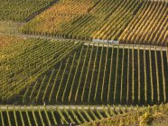 Germany, Rhineland Palatinate, View of vineyards at Ahr Valley during daytime — Stock Photo