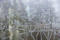 Germany, Frankfurt, Window glass with frost pattern — Stock Photo