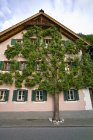 Casa pittoresca con albero di pera — Foto stock