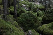 View of dark forest with moss covered rocks, Italy — Stock Photo