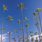 Palmeiras na frente do céu azul — Fotografia de Stock