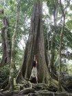 América Central, Costa Rica, mujer posando en la Ceiba en la selva - foto de stock