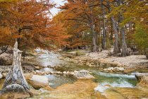 Cypress trees with golden leaves in Frio River Texas, USA — Stock Photo