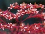 Flores rojas sobre fondo oscuro borrosa - foto de stock
