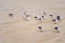 Möwen in Hafenaransas stehen auf Sand — Stockfoto