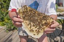 Пчеловод Холдинг Сота диких пчел в дневное время — стоковое фото
