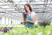 Woman in greenhouse with aster plants — Stock Photo