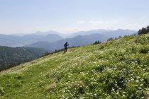 Німеччина, Баварія, людина походи на Gindelalmschneid горі, aconite широколистяних buttercup передньому плані — стокове фото