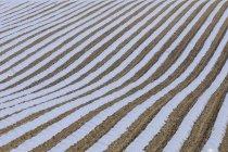 Испании, Андалусия, ряда сельскохозяйственных культур, выращиваемых под cloches — стоковое фото