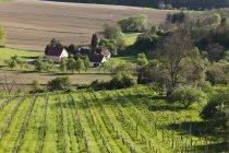 Австрия, Штирия, виноградник в деревне Штраден — стоковое фото