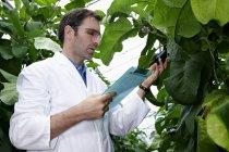 Científico en examinar las plantas de invernadero - foto de stock