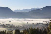 Árvores e montanhas de nevoeiro — Fotografia de Stock