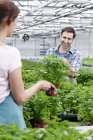Man and woman in greenhouse between parsley plants — Stock Photo