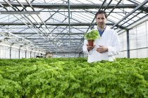 Scientist standing between parsley plants — Stock Photo
