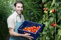 Uomo che raccoglie i pomodori — Foto stock