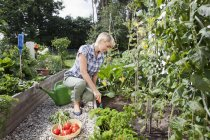 Mature woman with vegetables in garden — Stock Photo