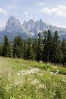 Montagne del Sassolungo e Sassopiatto — Foto stock