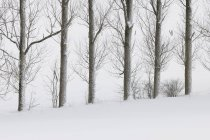 View of snow covered tree trunks in snowy landscape at Rhoen Mountains — Stock Photo