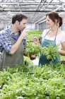 Mature man and woman tasting rocket plants — Stock Photo