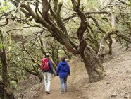 Spain, Couple hiking through Laurel forest at Garajonay National Park — Stock Photo