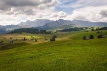 Italia, Alto Adige, Dolomiti, Alpe di Siusi, il prato alpino d'alta quota durante il giorno — Foto stock