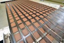 Righe di biscotti al cacao sulla linea di produzione nella fabbrica di cottura, Sassonia-Anhalt, Germania — Foto stock